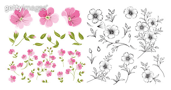 Set of linum flower elements. Collection of flax flowers on a white background. Flower isolated against white. Beautiful set of flowers.