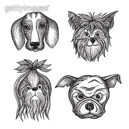 hand drawn realistic faces of dogs