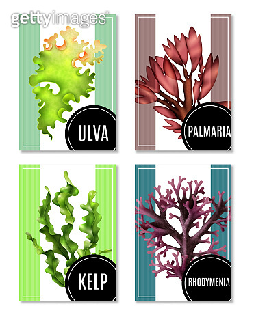 realistic seaweed poster banner set