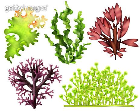 realistic seaweed food