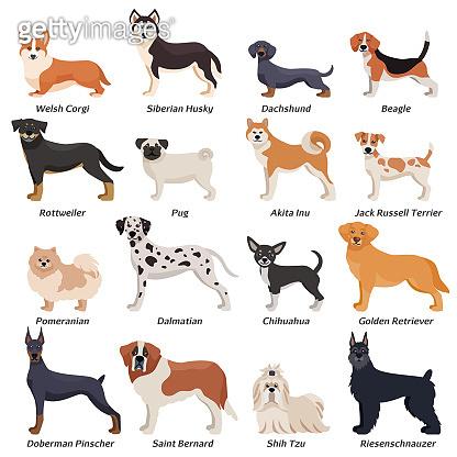 purebred dogs set
