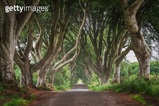 Scenic Dark Hedges Northern Ireland