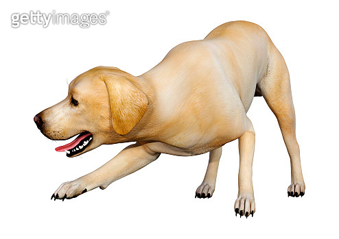 3D illustration labrador dog on white