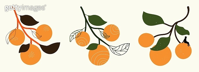 Vector illustration set with oranges with leaves. Doodle elements, grunge dots, man silhouette