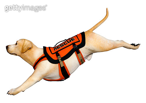3D illustration labrador rescue dog on white