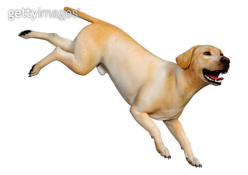 3D illustration yellow labrador dog on white