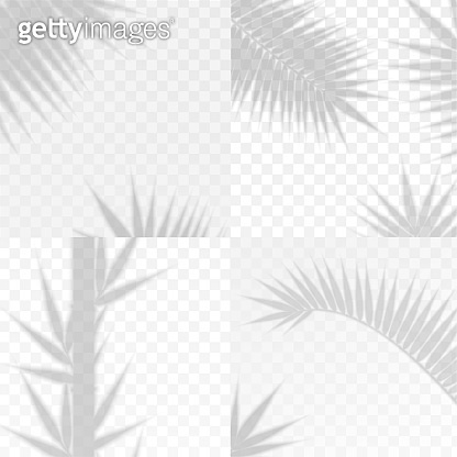 Bamboo and Palm Branches Leaves Overlay Effect Transparent Shadow Set. Vector