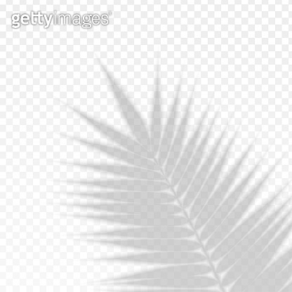 Palm Branch Leaf Overlay Effect Transparent Shadow. Vector