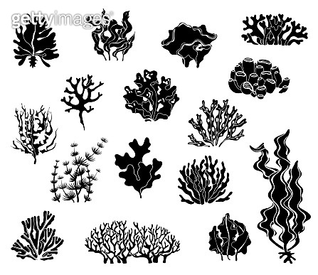 Seaweed silhouettes. Black icons of coral elements and underwater wildlife marine vector set