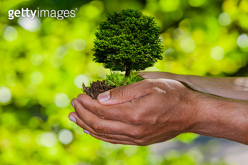 Protected Tree in a human hand