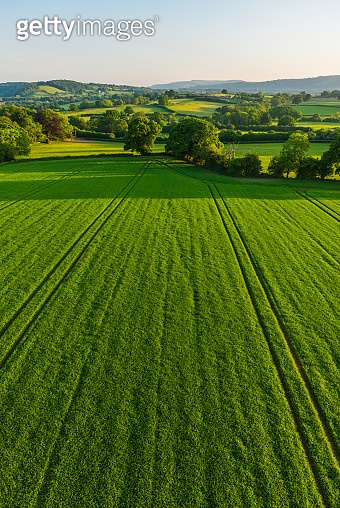 Aerial photograph over healthy green crops in picturesque pasture farmland