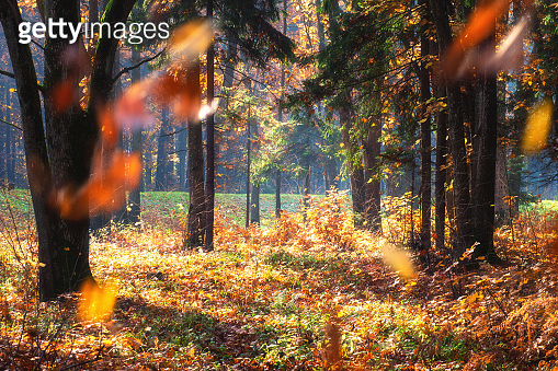 Colorful landscape of mixed forest  in sunny autumn day.