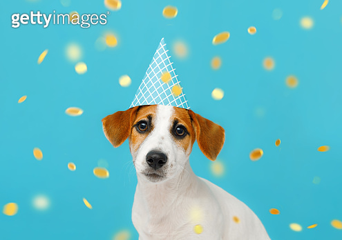 Puppy dog in party hat with  celebrating birthday