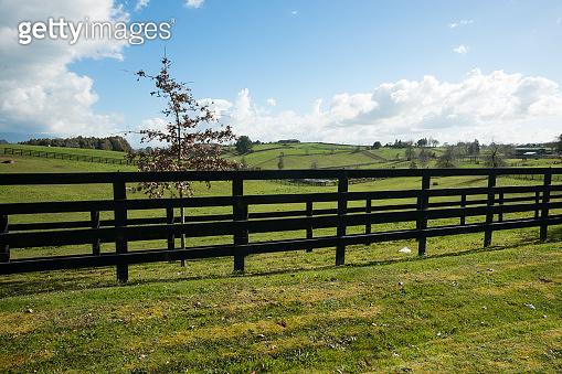 Waikato farmland expansive green fields beyond dark wooden fence and small tree.