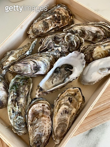fresh oysters in container