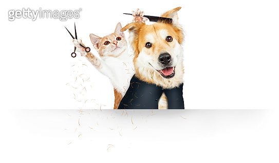 Funny Cat Grooming Dog Web Banner
