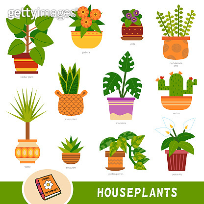 Colour set of houseplants, collection of nature items with names in English. Cartoon visual dictionary for children about flowers