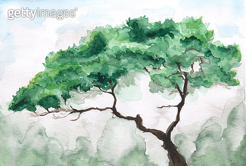 green pine on a rock watercolor outdoor