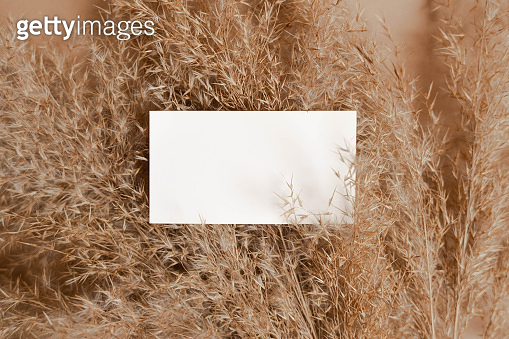 Business card template on beige background with reeds. Flatlay view. Corporate card. Reeds branch.  Pampas grass