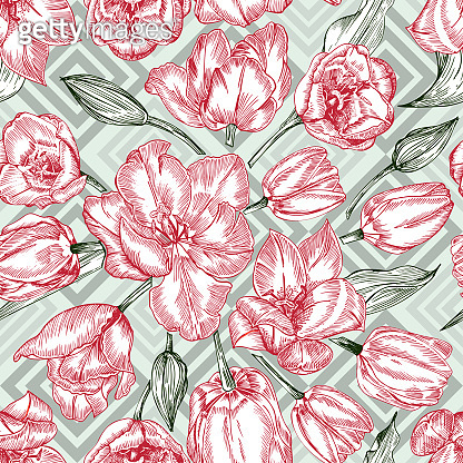 Greeting seamless with Spring flower tulips bouquet in red and green colors on blue background. Engraving drawing Vintage style
