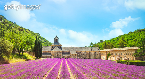 Abbey of Senanque and field of lavender flowers. Gordes, Luberon, Provence, France.
