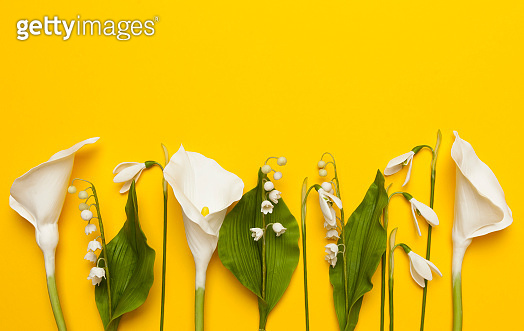Flowers on yellow background, copy space for text