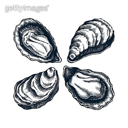 Cooked oysters illustrations.