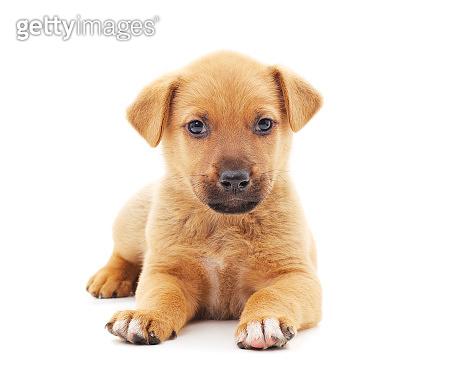 One little dog.