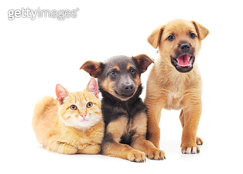 Two dogs and a cat.