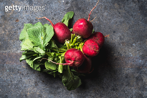 harvesting bright fresh organic radishes with leaves, purple colorful on blue grunge table