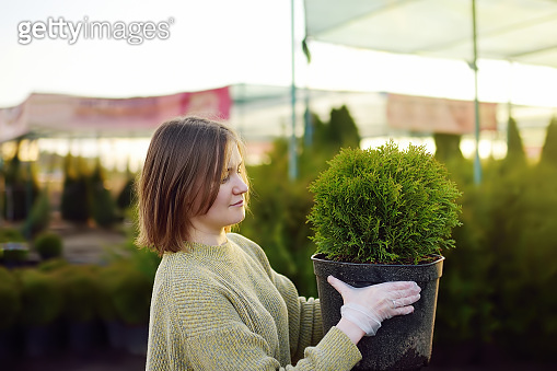 Young woman choosing and buying thuja in garden center in early springtime. Landscaping design. Season of planting.