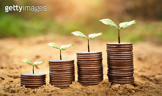 idea plant with money growing on soil. concept finance and accounting