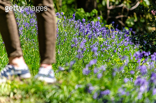 Feet on a bluebell field in springtime