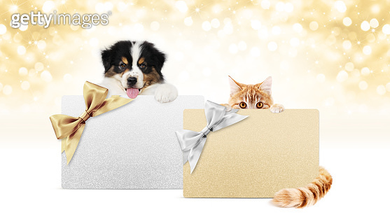 merry christmas, puppy dog and cat pets together showing gift greeting card isolated on blurred golden lights and white background, blank template with copy space