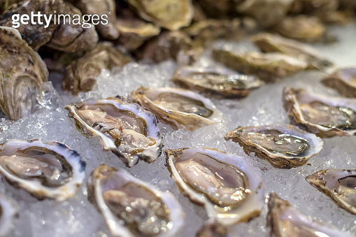 Fresh oysters on the ice table