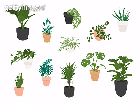 Set of plants growing in pots. Flowerpot isolated objects, houseplant flower pot collection.