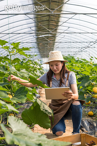 Close-Up of Agriculture Scientist at Greenhouse