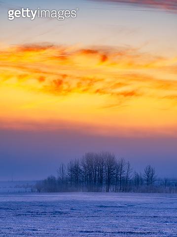 tree frozen snow sunrise