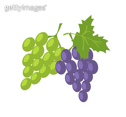 Two Sorts of Grape, Green and Lilac Fresh Fruits