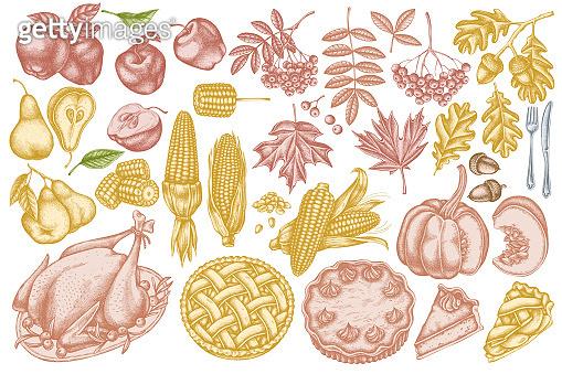 Vector set of hand drawn pastel pumpkin, fork, knife, pears, turkey, pumpkin pie, apple pie, corn, apples, rowan, maple, oak
