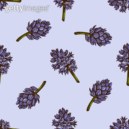 Seamless pattern with hand drawn colored hyacinth