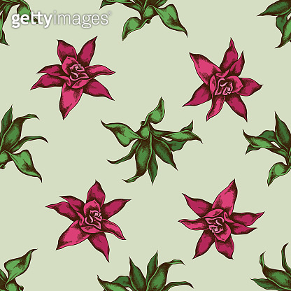 Seamless pattern with hand drawn colored guzmania