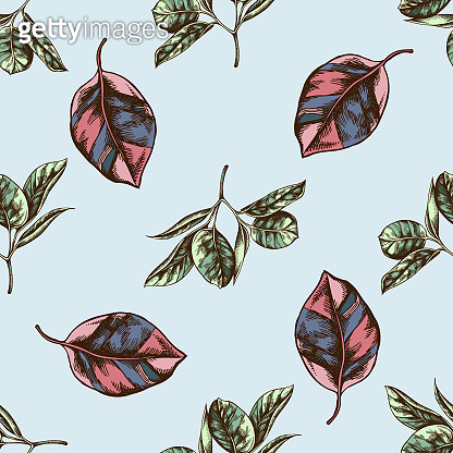 Seamless pattern with hand drawn colored ficus