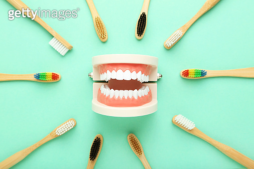 Teeth model with toothbrushes on mint background