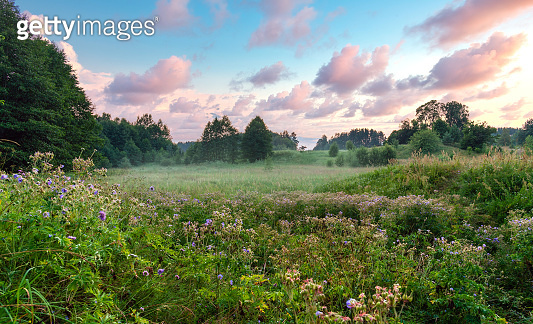 Beautiful field meadow flowers  in the green grass under the sun the light of the and the pink and white airy clouds. Delightful pastoral airy fresh artistic image nature.