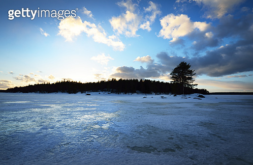 Dramatic blue sunset sky above the snow-covered frozen Kuito lake, coniferous forest in the background. Evergreen trees close-up. Storm clouds. Karelia North, Lapland