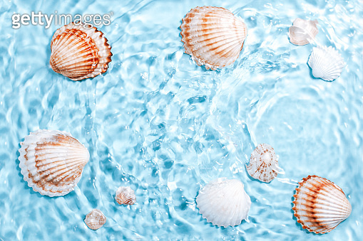 Beautiful crystal clear water swirling and rippling, sea shells underwater. World ocean day card with shells and blue water