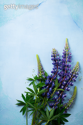 Bouquet of simple blue flowers. Still Life with Lupine. Selective focus.Top view.Copy space.