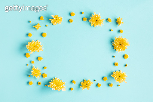 Flowers composition. Frame made of yellow chrysanthemum flowers on blue background. Flat lay, top view