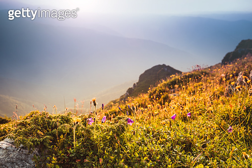 View of beautiful spring flowers at sunlight and mountains at the distance. Selective focus and vintage effect. Concept awakening nature.